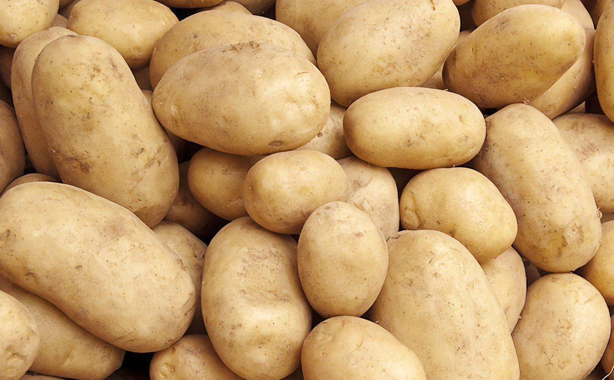 Bangladesh targets potato production of over 4 million tons just for the Rangpur division