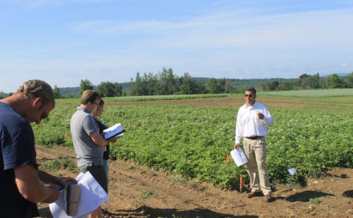 Range of potato experiments underway at Maine Research Farm (Aroostook)
