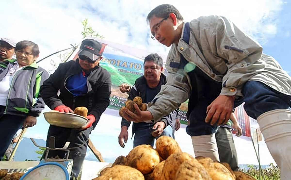 Philippines: Benguet potato growers reported double yield with seed potatoes from Canada