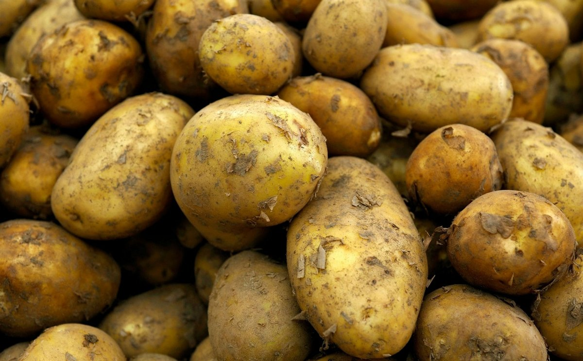 British New Potatoes
