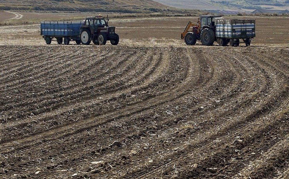 Algunos agricultores optan por no sacar las patatas de la tierra para no aumentar las pérdidas