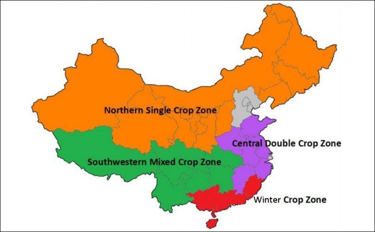 Potato Production in China to rebound this marketing year