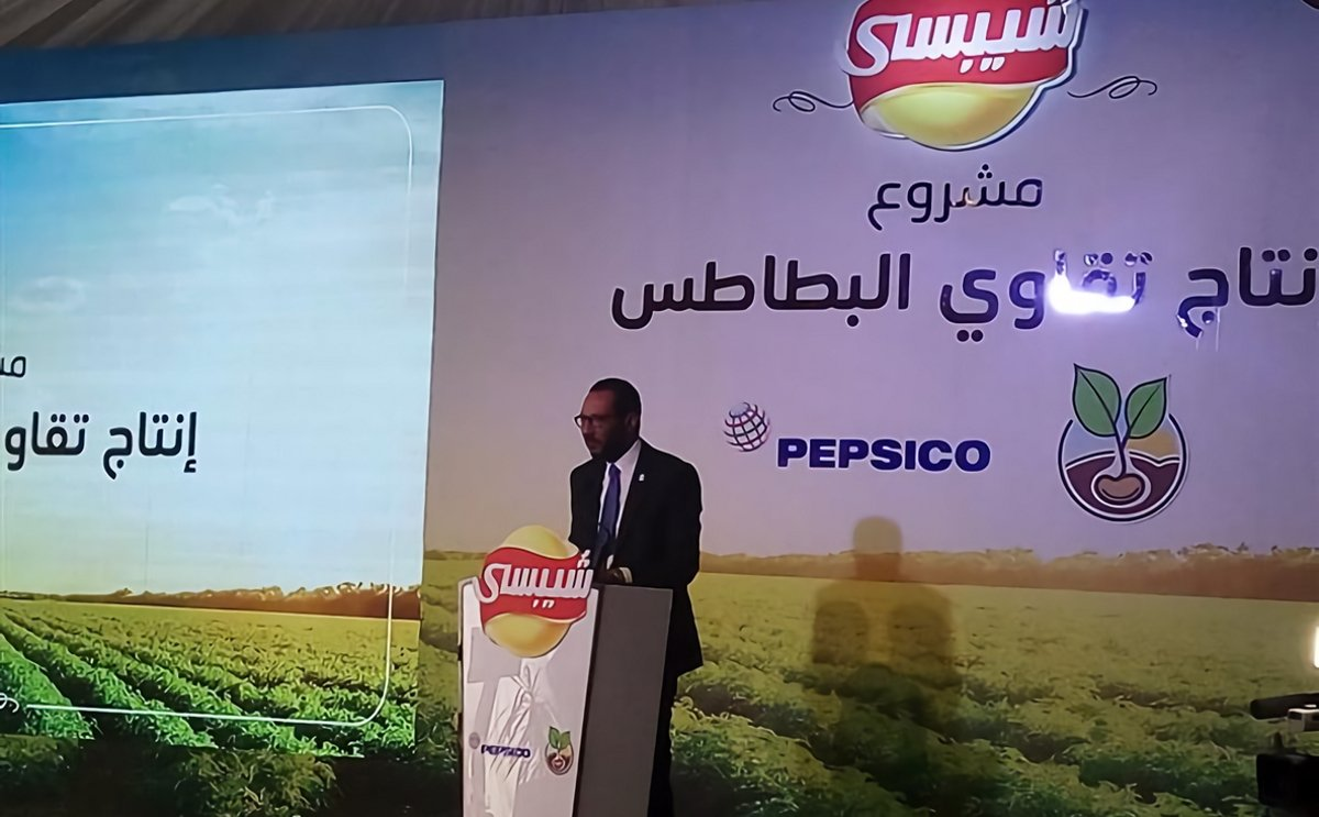 Chipsy launches its biggest agricultural programme for potato seed production