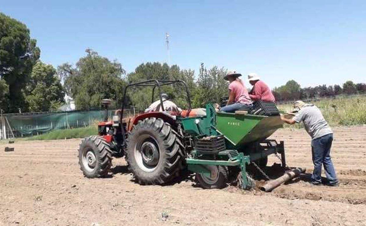 Buscan desarrollar el cultivo de papas en zonas cordilleranas de San Juan y San Rafael