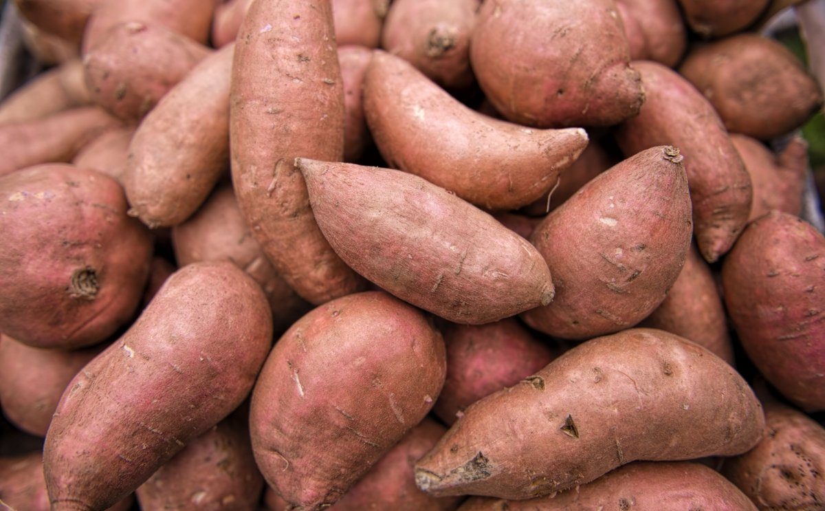 EU tariffs on US sweet potatoes increase 25%