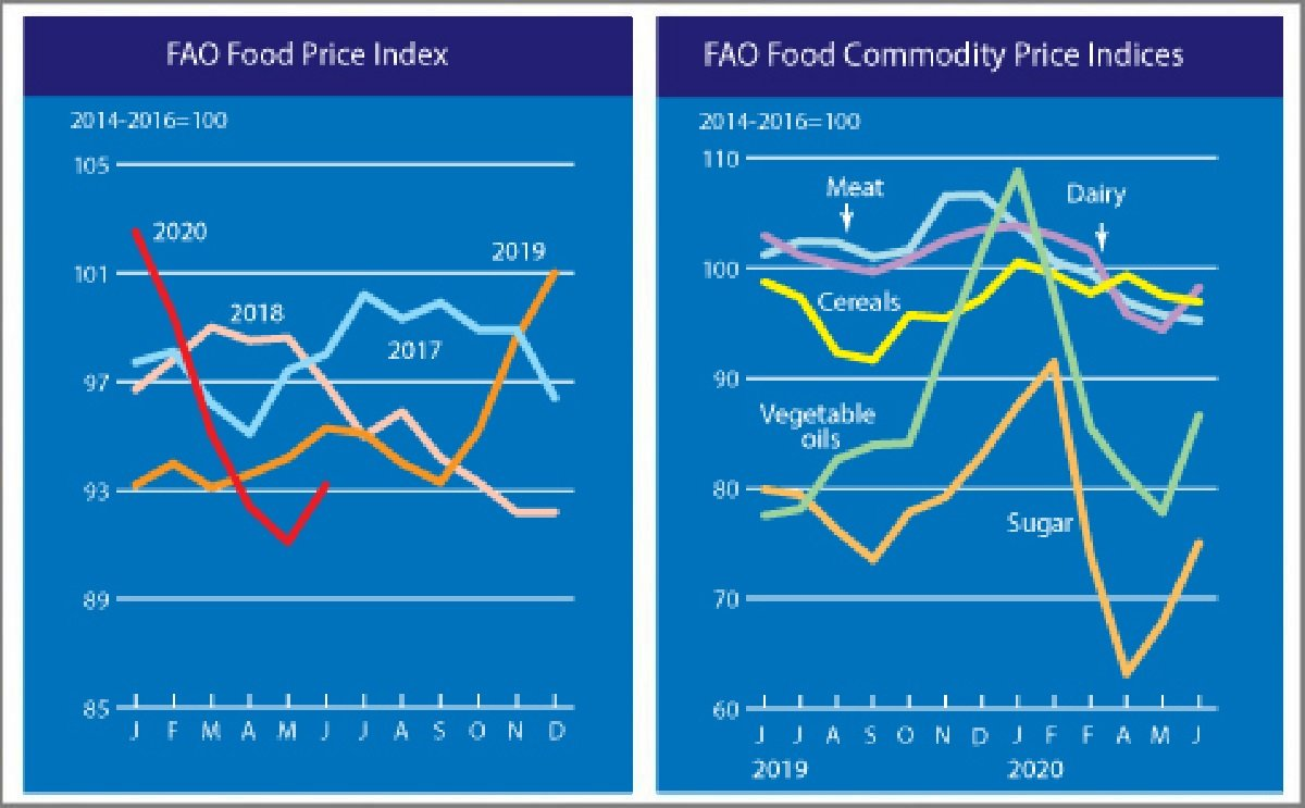 The FAO Food Price Index rebounds in June