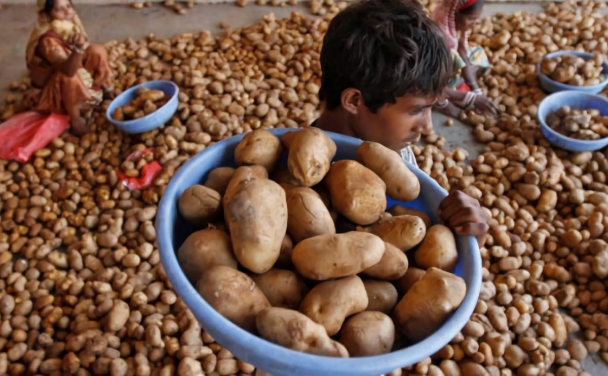 Pepsico India under pressure to drop lawsuits for growing its potato variety without permission