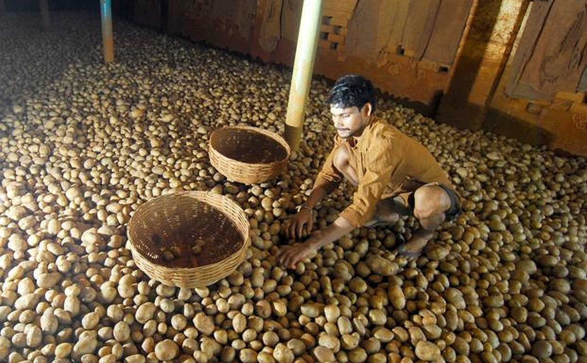 Madhya Pradesh Poor supply of potato increases production cost of chips