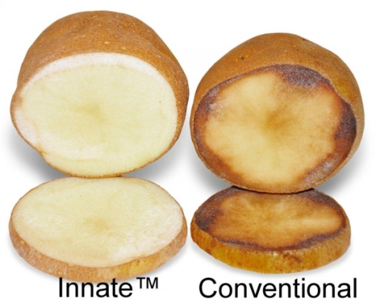Simplot Innate Potatoes pass voluntary FDA safety review