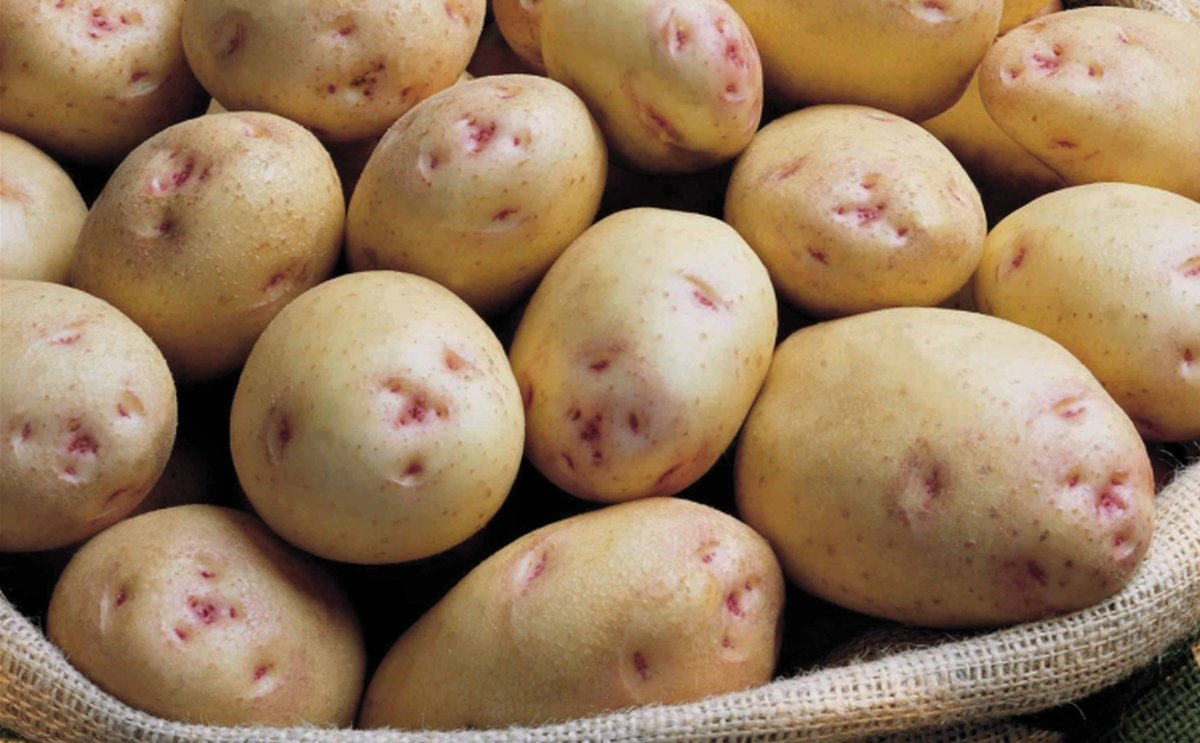 Utkal Tubers India plans to ramp up its production of seed potatoes