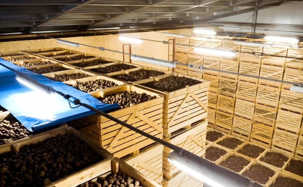 Ucrania: La superpotencia agraria vuelve a quedarse sin patatas