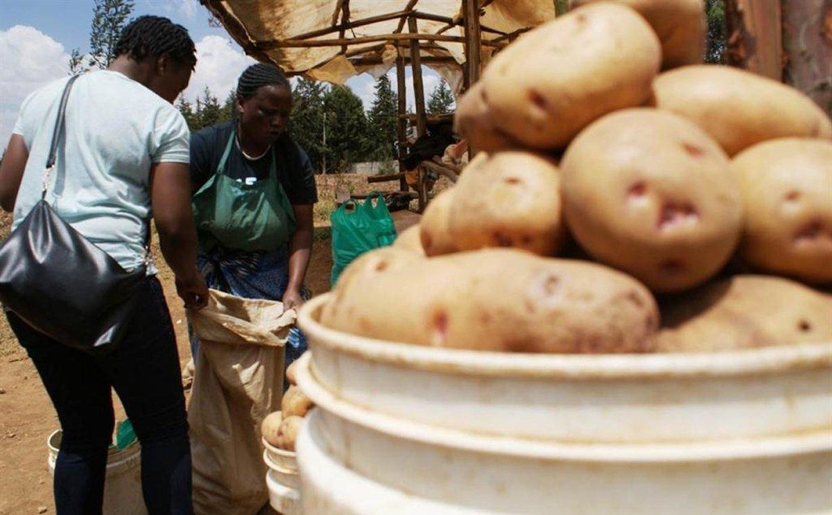 Despite potato shortage in Kenya, Nyandarua County potato farmers hardly benefit
