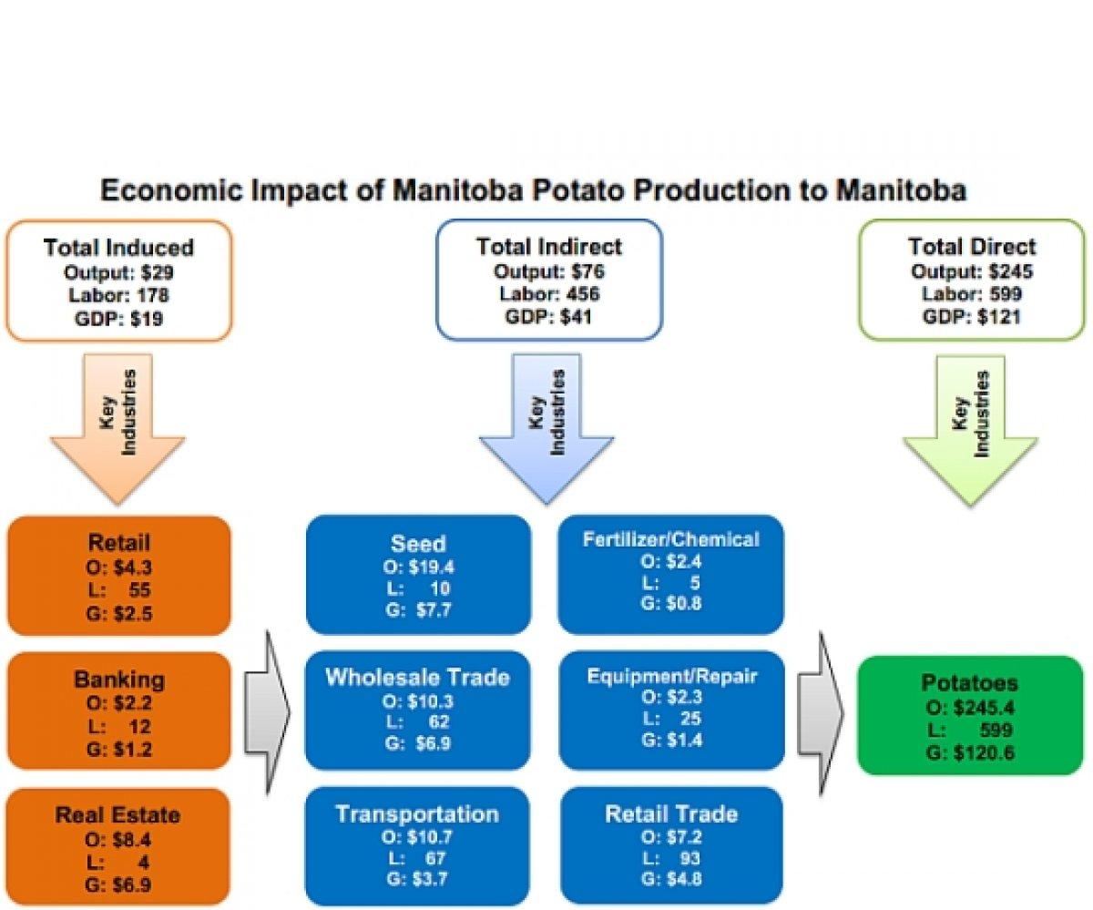 The economic impact of the potato industry in Manitoba