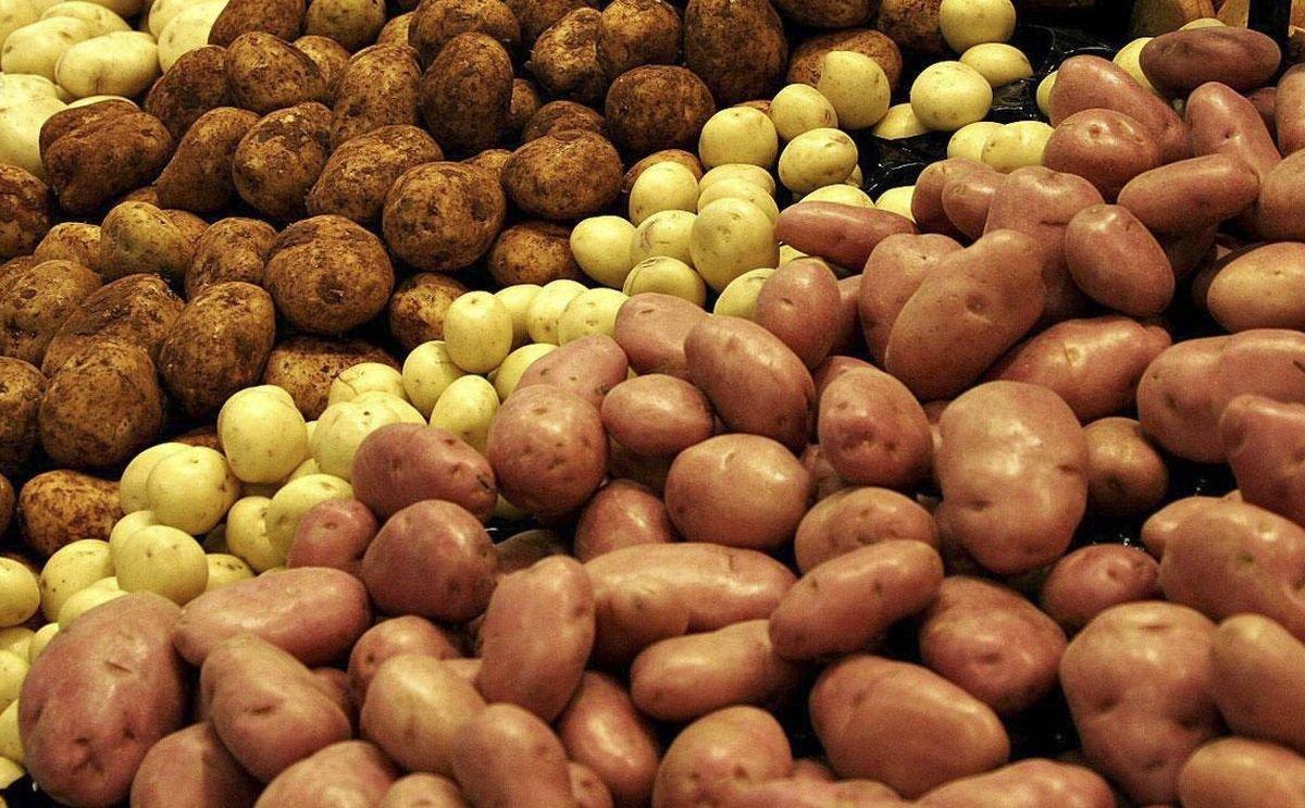 Potato production drops off in Moldova