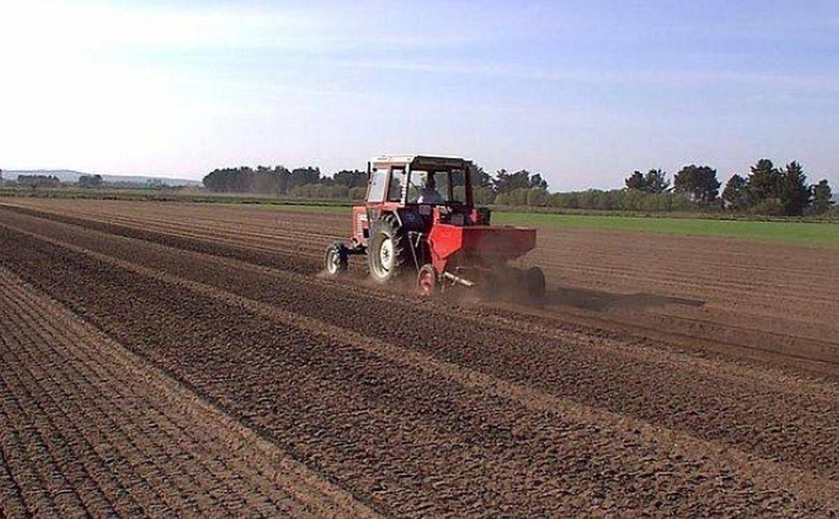 NEPG define la campaña de patata 2020/2021 como un desafío para los cultivadores