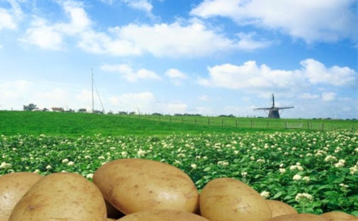 Major changes at North-western European Potato Growers (NEPG)