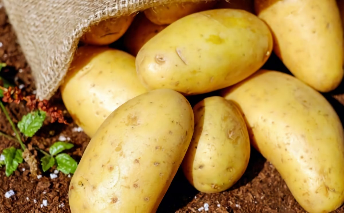 Odisha government seeks renewal of agreement with International Potato Centre