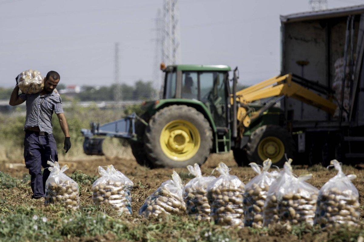 La patata francesa inunda el mercado español y tira los precios