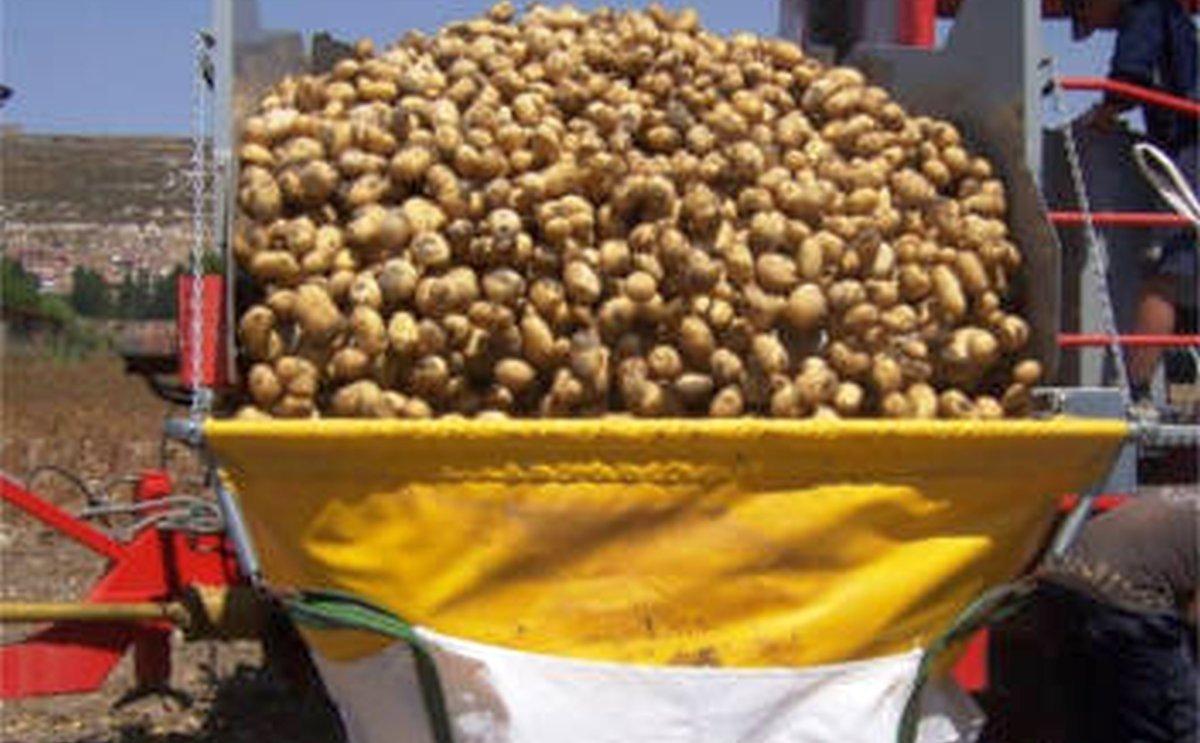 APPACYL recomienda sembrar menos patata en 2021 y que sea de lavado