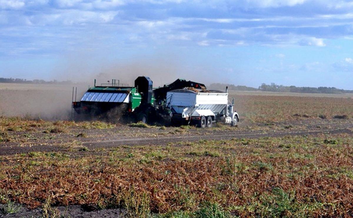 Frost ends Manitoba potato harvest