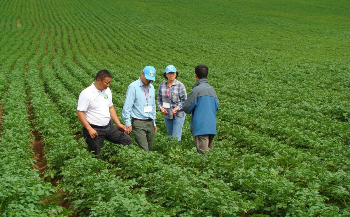 Mongolia fully self-sufficient for wheat and potato, says agriculture minister