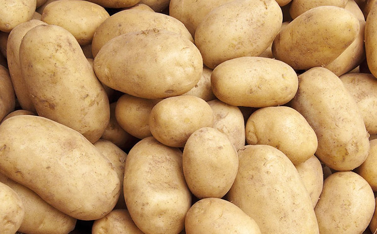 Bangladesh imports over 2,000 tons of seed potato from the Netherlands