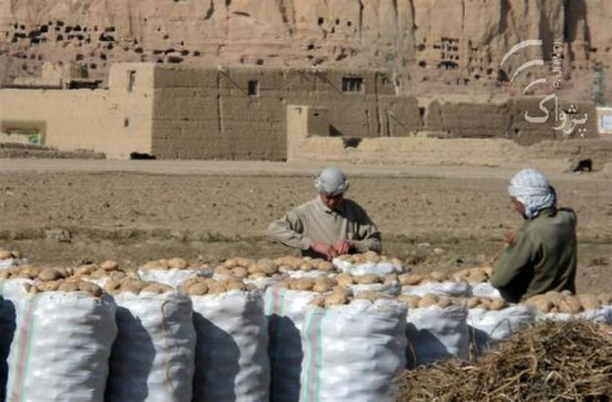 Afghanistan could be self-sufficient in potatoes with proper storage facilities
