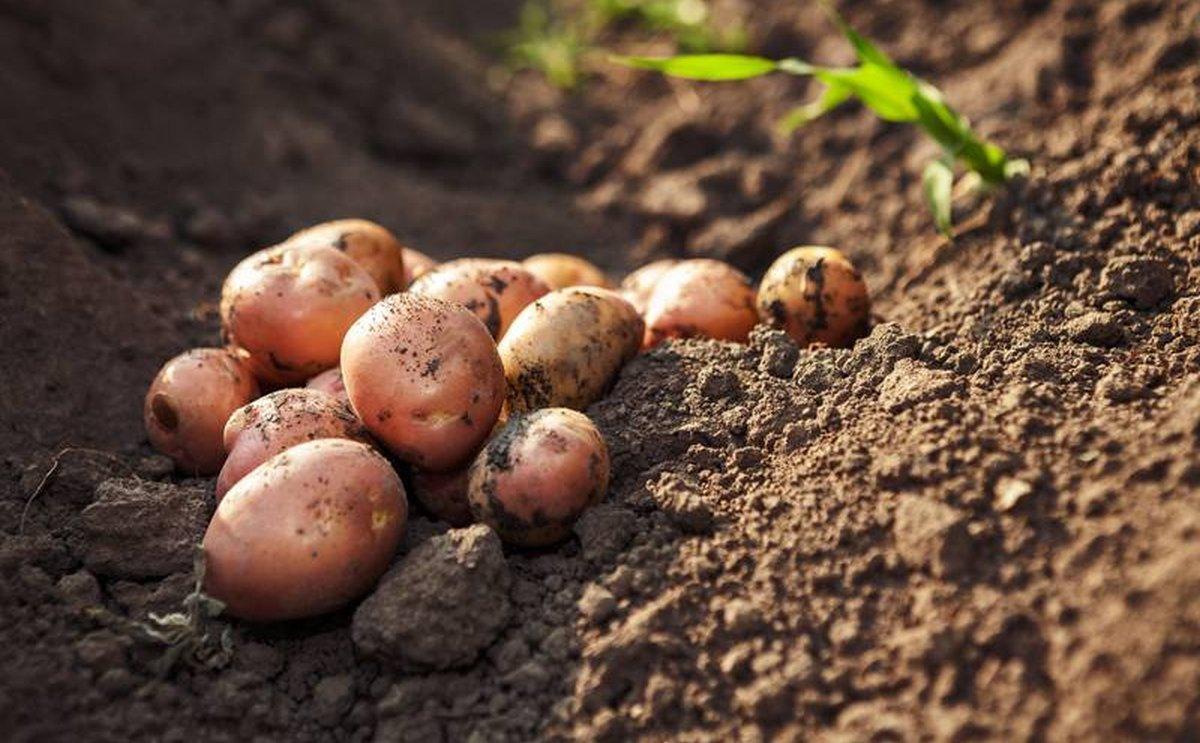 P.E.I. Potato Board elects new executive team