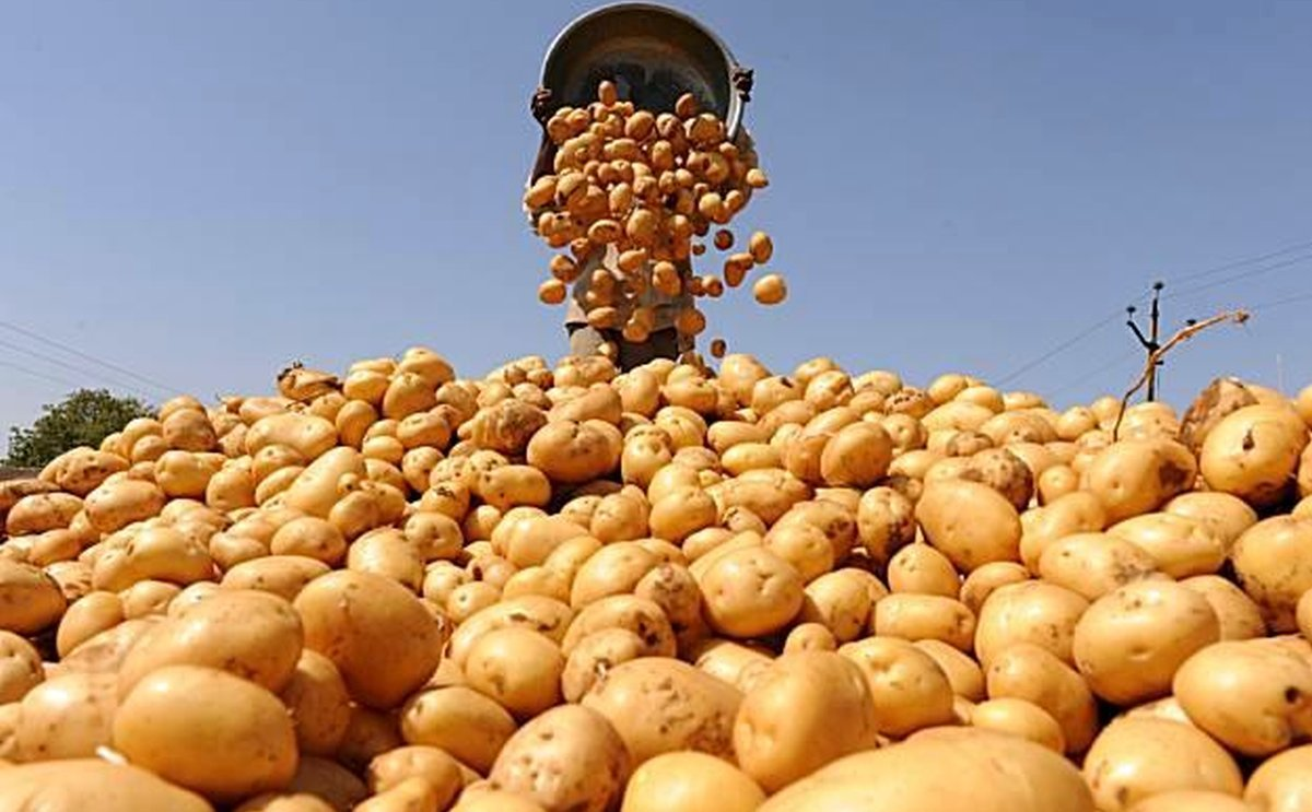 The government of Pakistan plans to produce 4.87 Mln Tons Potatoes