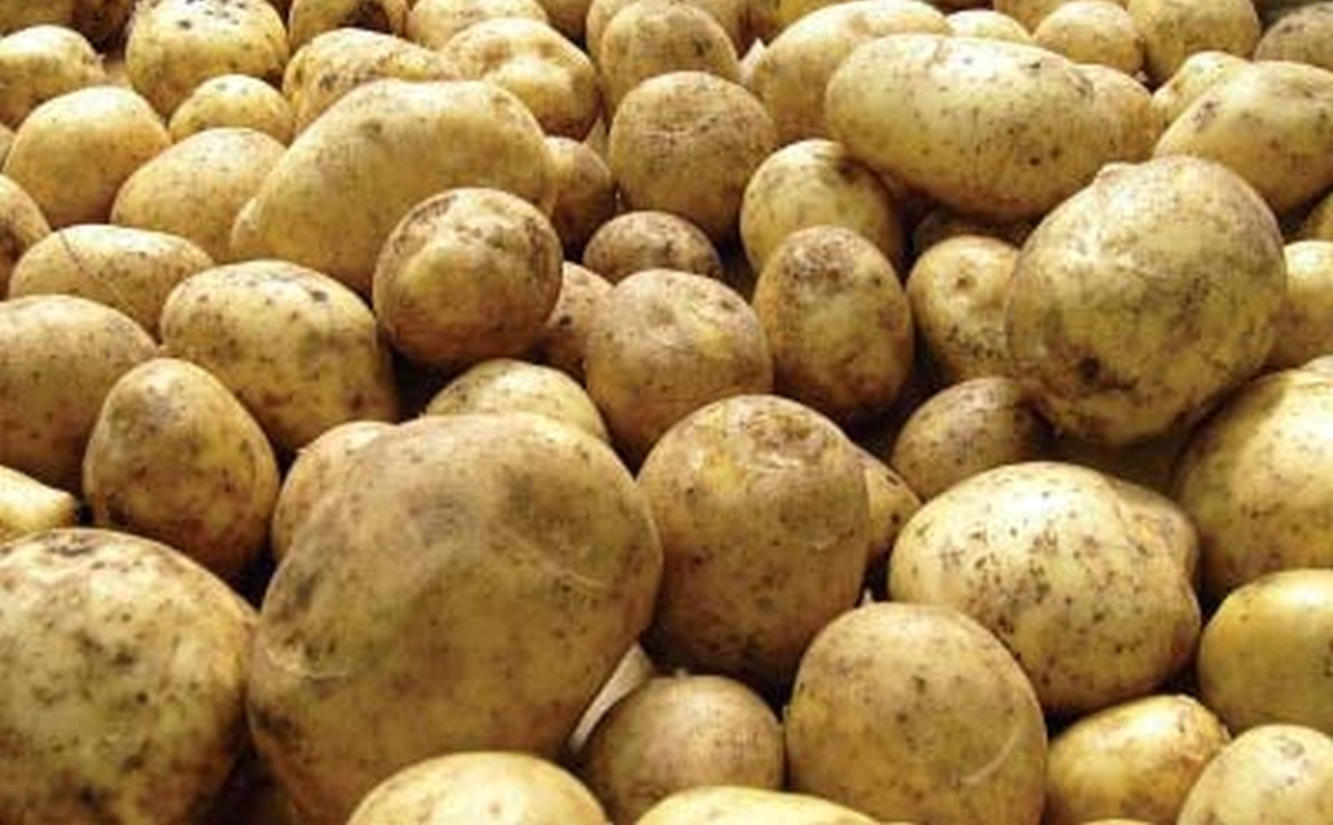 Government of Pakistan to form Potato Development Council