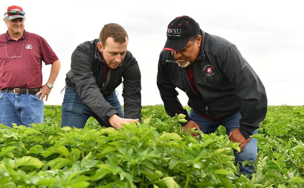 Supported by potato industry stakeholders, Washington State University expands research on soil health