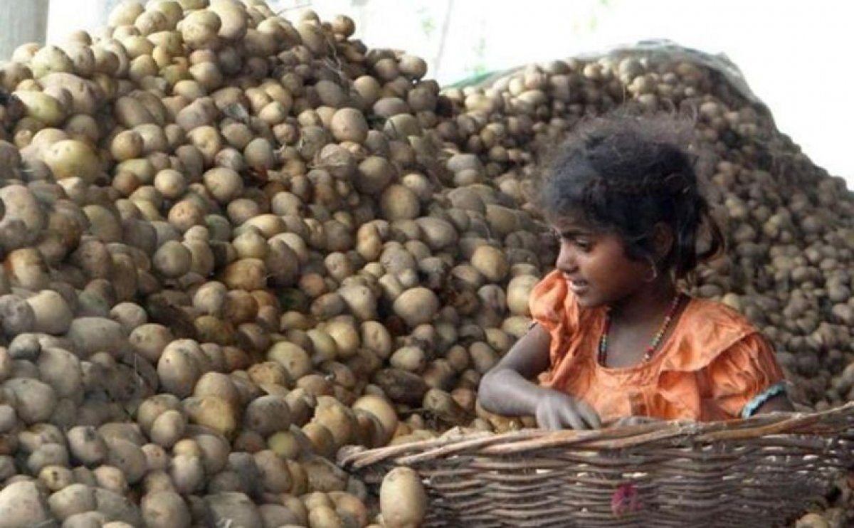 With 40% cold stores in Punjab flooded with old crops, potato glut likely this year too