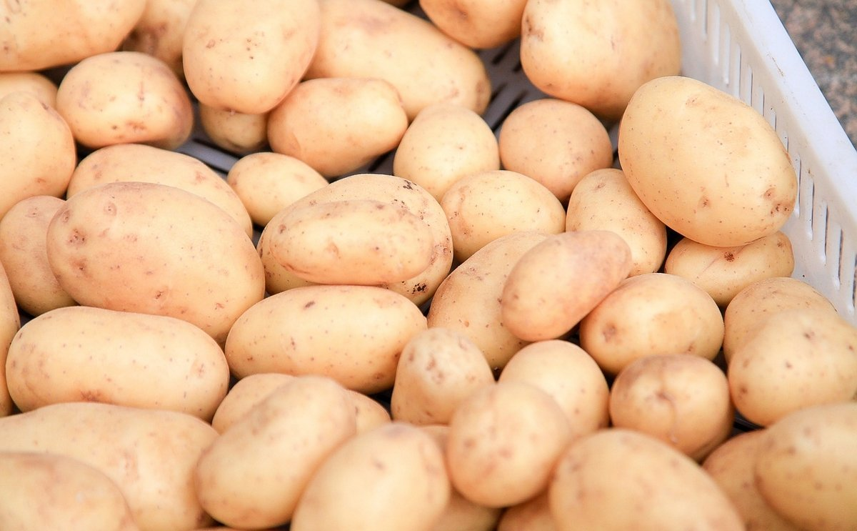 Russian Federation increased potato exports by 36 percent
