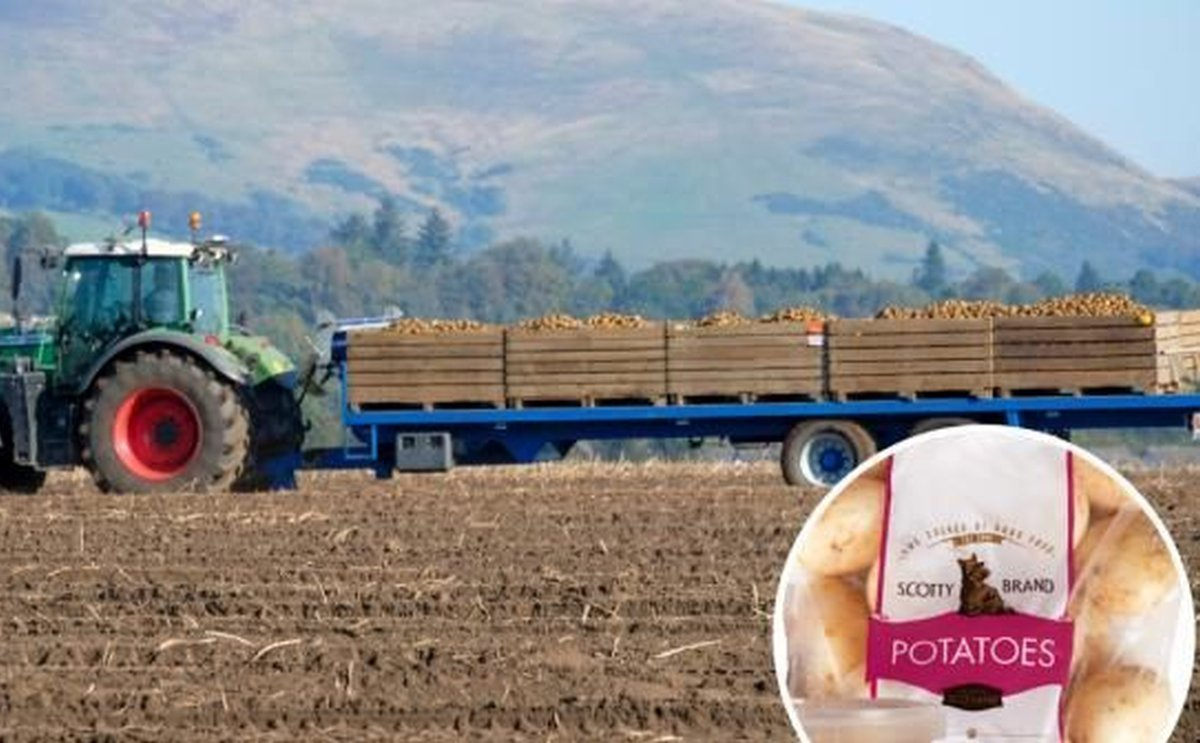 The potato company Scotty Brand saves 27 tons of plastic from its packaging