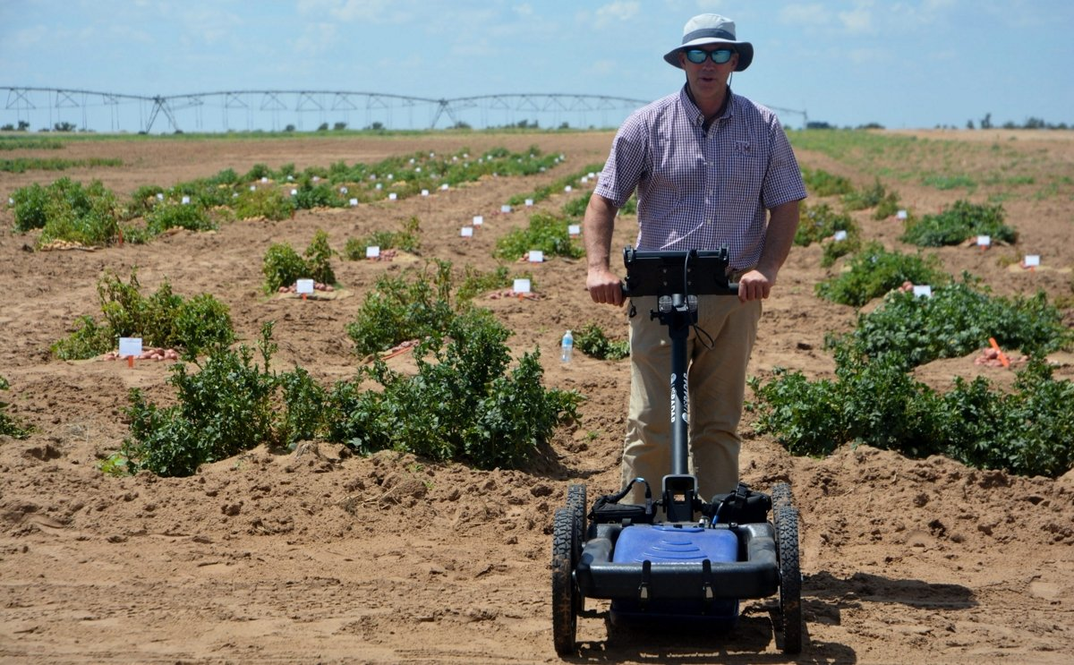 Early maturing potato cultivars identified successfully using ground-penetrating radar by Texas A&M Agrilife