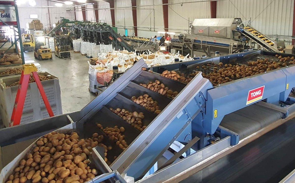 US potato packer Skone & Connors installs Tong grading and washing equipment