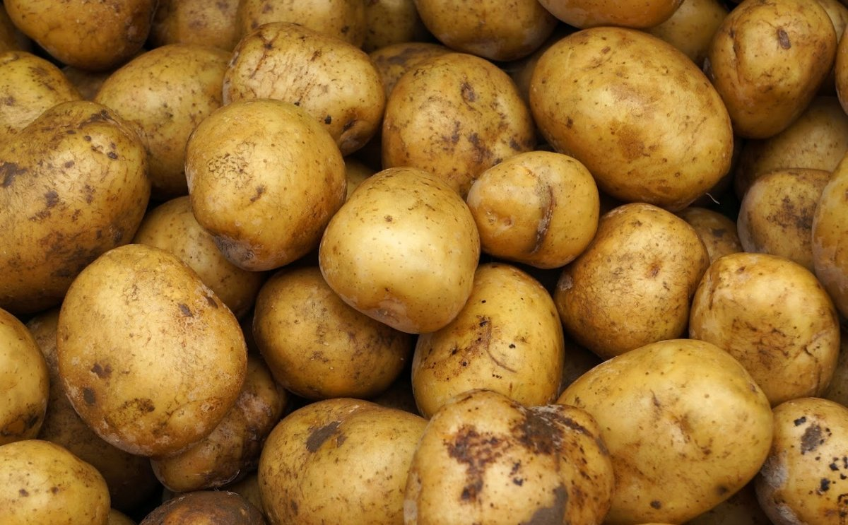 US potato imports surge
