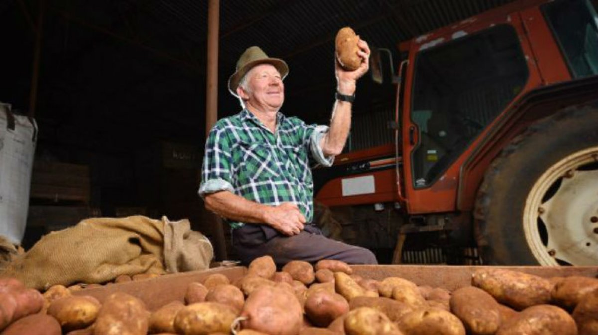 Is there a future for potato farming in the traditional potato patch of Victoria?