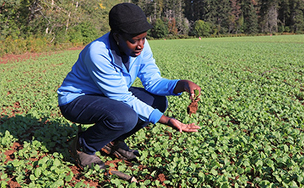 Winter cover crop research yields positive results for environment