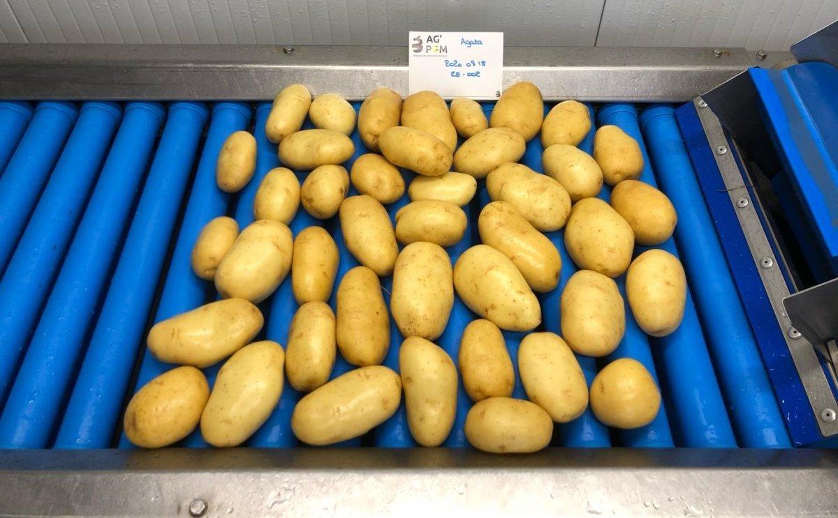 Francia: 'Esperamos unos meses complicados en el mercado de la patata.'