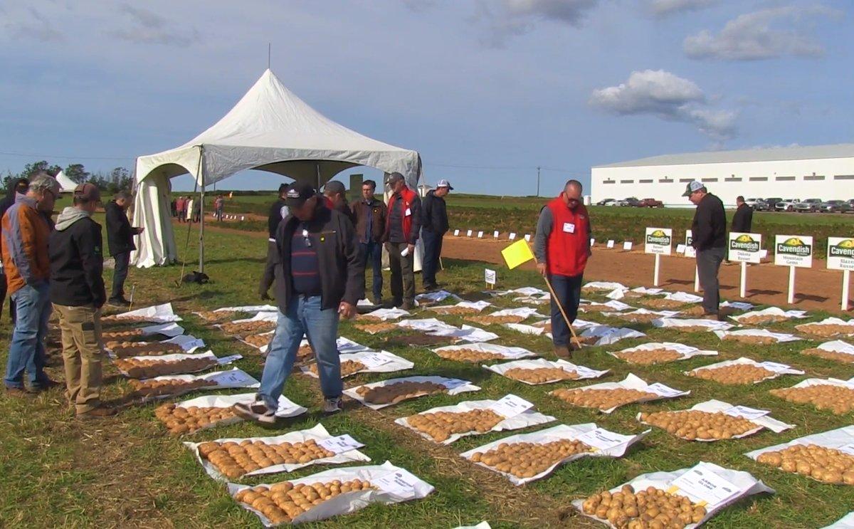 Cavendish Farms to open Potato Research Centre in Prince Edward Island