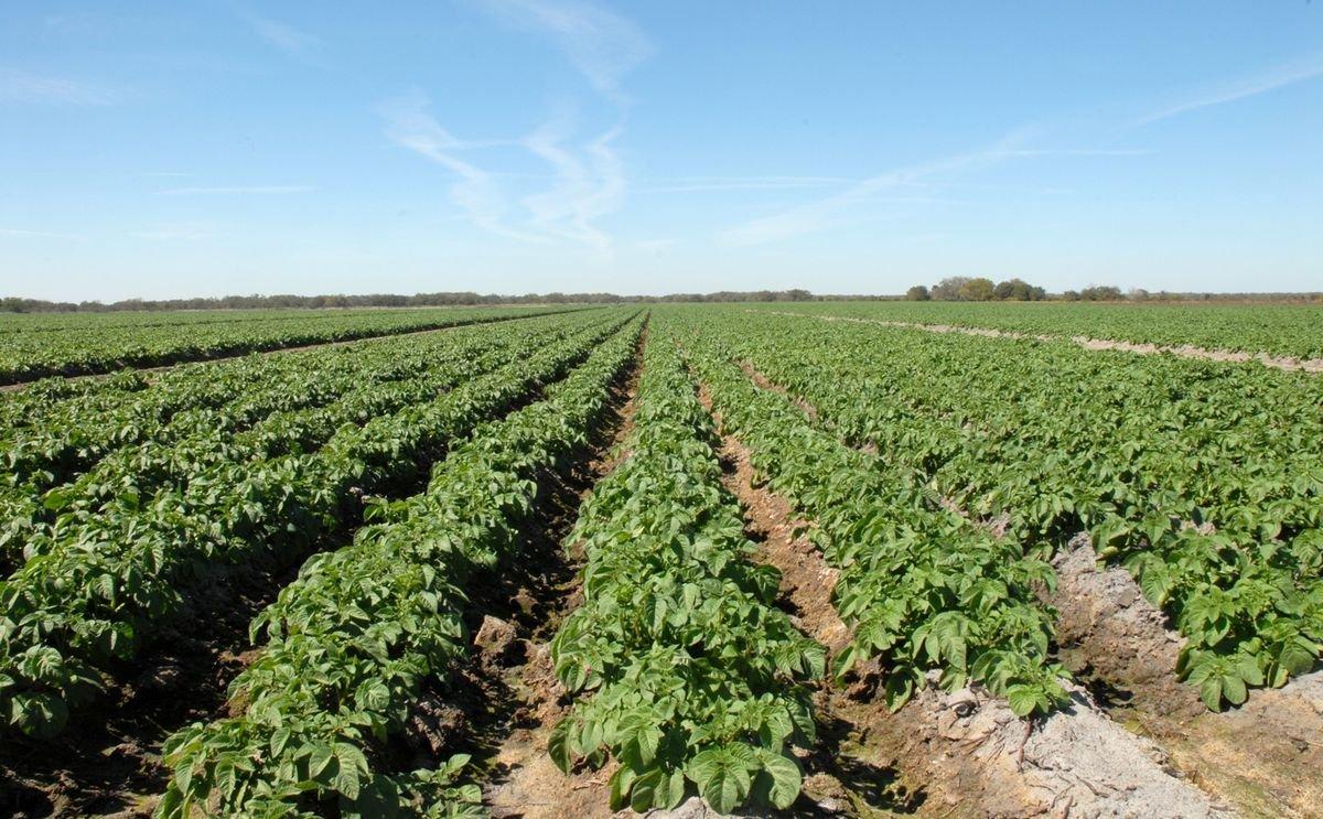 Florida potato harvest begins