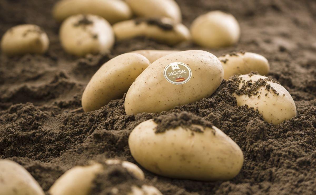 La patata nueva de España llega a los supermercados con Patatas Meléndez