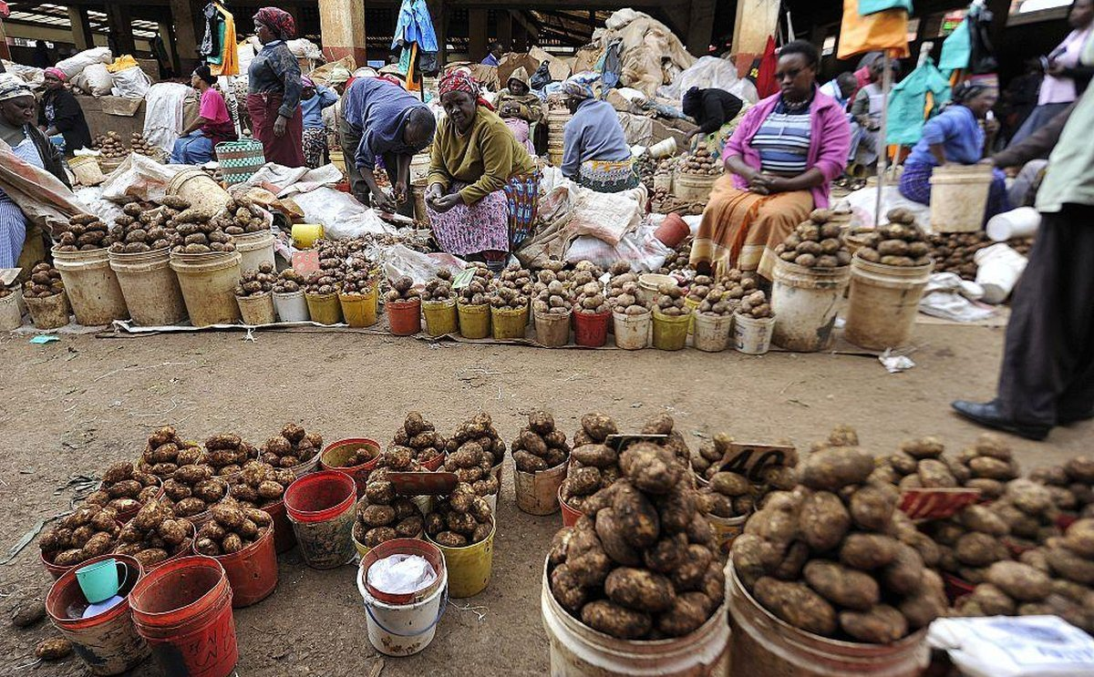 Dealing with Potato Cyst nematodes in East Africa