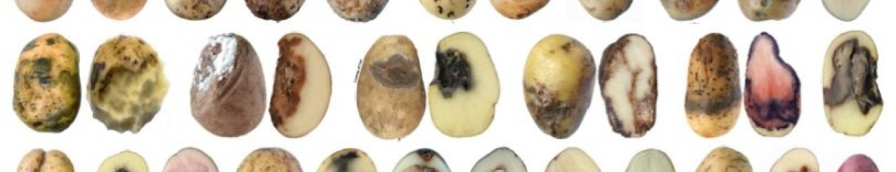 Potato Diseases