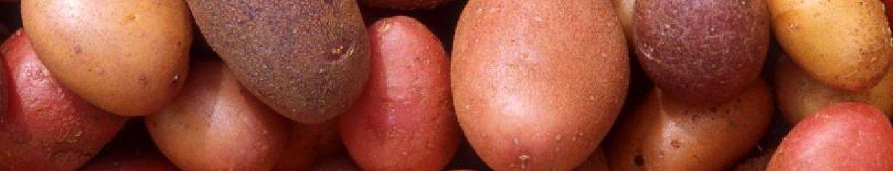Potato Varieties and Seed