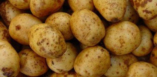 31st CUPGRA Annual Potato Conference 2020
