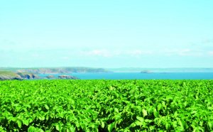 Management buyout at Puffin produce