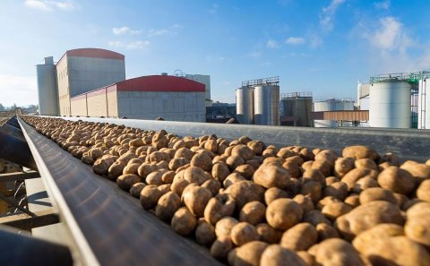 Longest ever starch potato processing campaign: AGRANA processed a record quantity of 322,000 metric tons of starch potatoes in 189 days