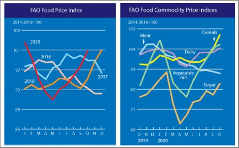 FAO Food Price Index continued its upward trend in October